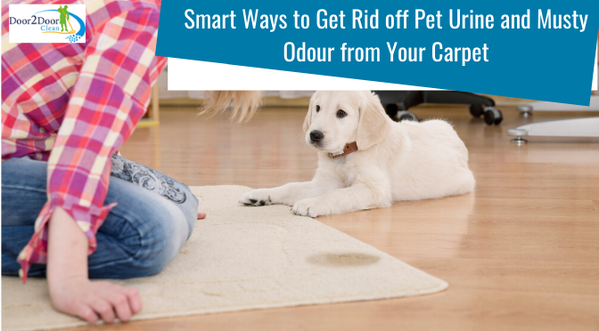 4 Smart Ways to Get Rid off Pet Urine and Musty Odour from Your Carpet